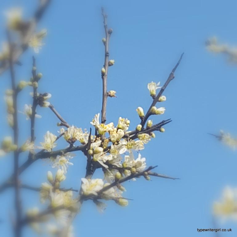 springblossom2