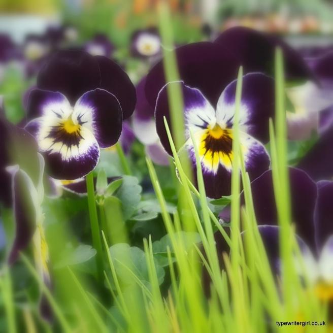 springblossom6