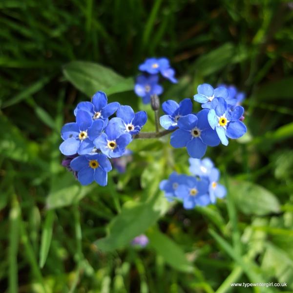 petals1