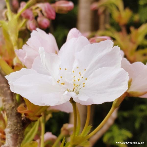 petals5