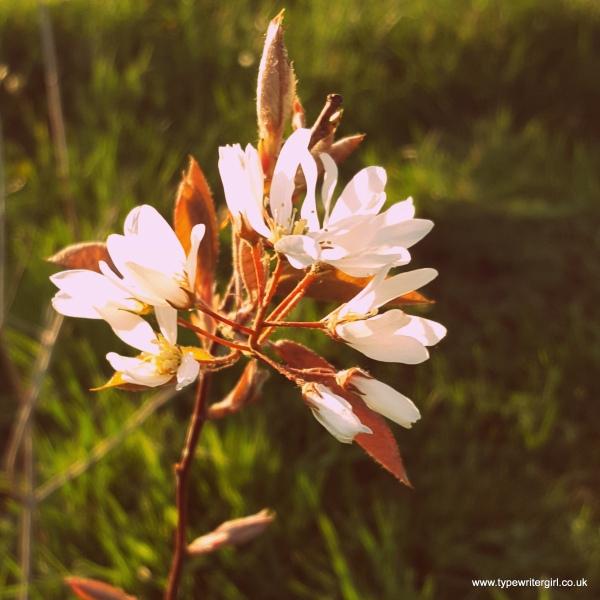 petals8