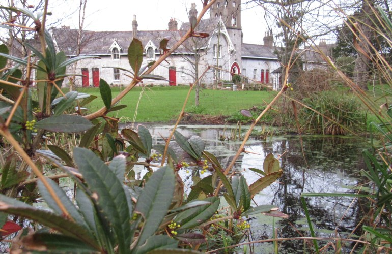 a view of Sheils Houses from the pond