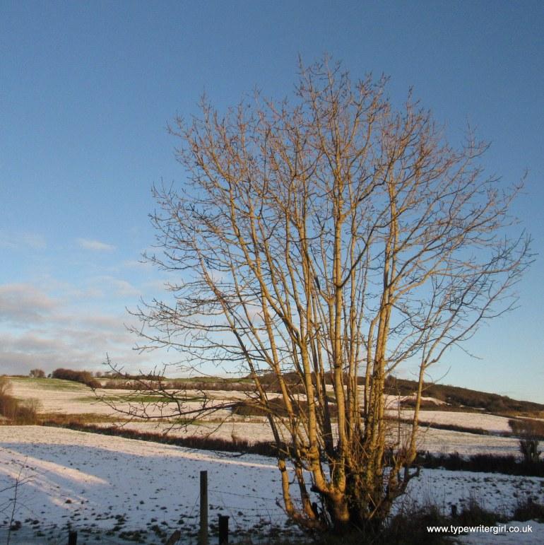 winter scene Carnmoney Hill
