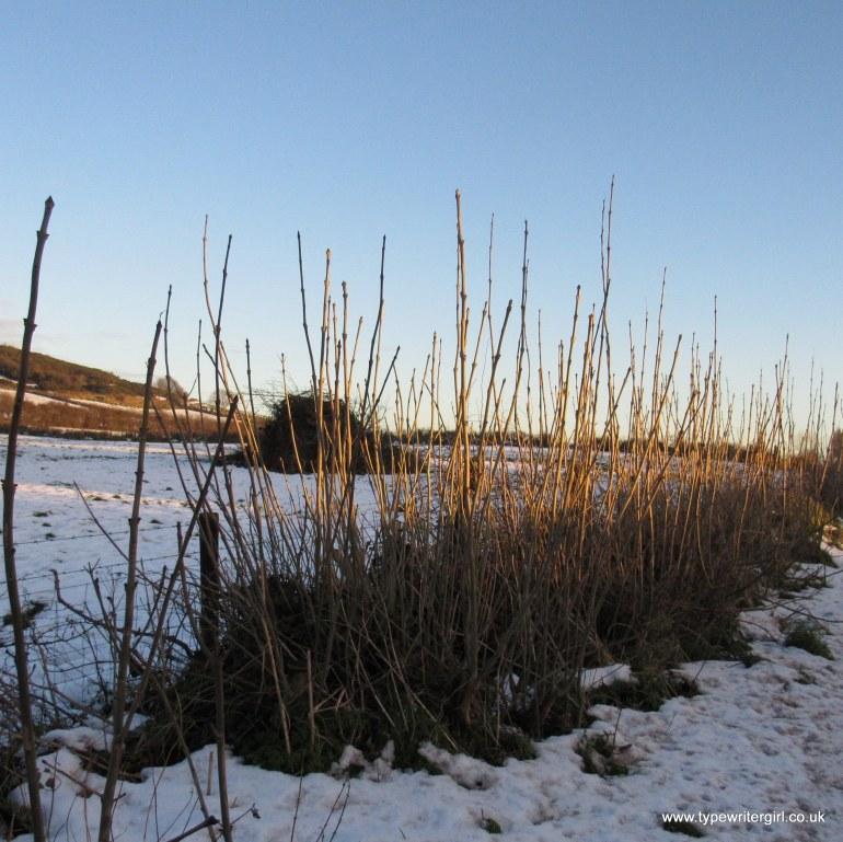 winter scene at Carnmoney hill