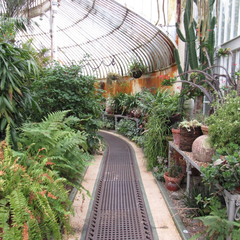 the Palm House at Belfast