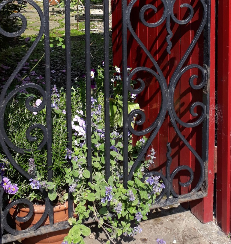 pretty gate and flowers