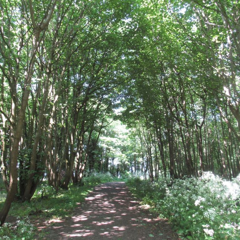 Rea's Wood