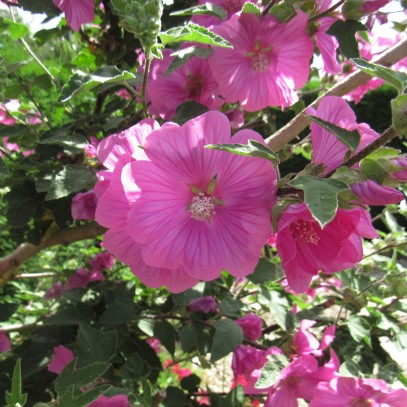 July Blooms 8