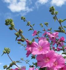 June Blooms 6