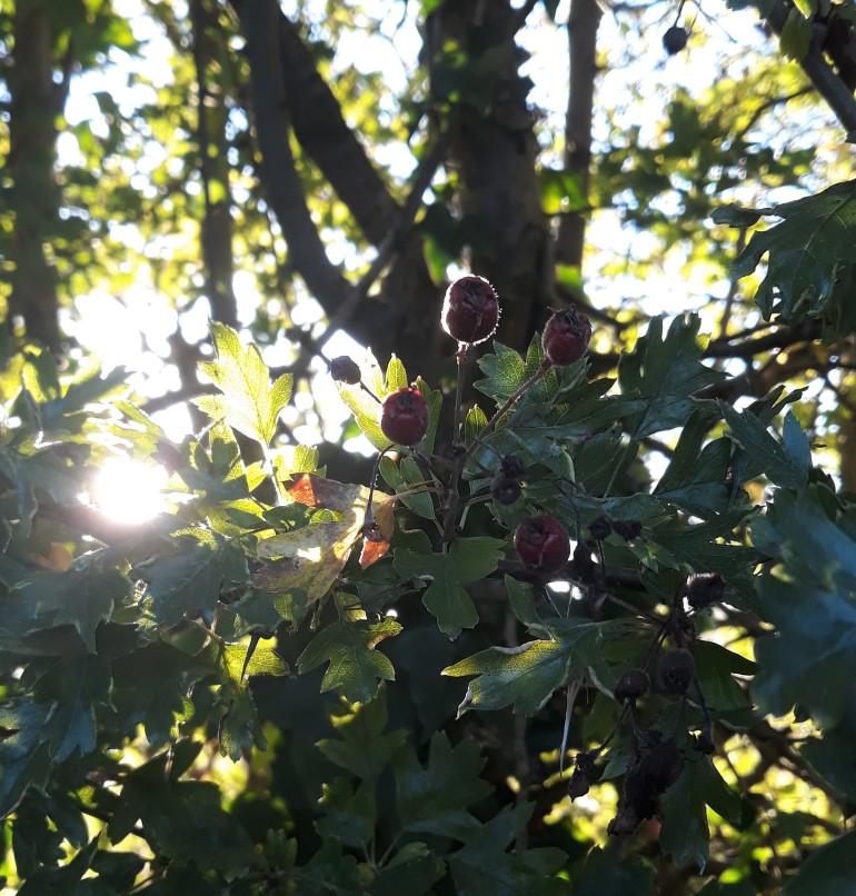 morning berries