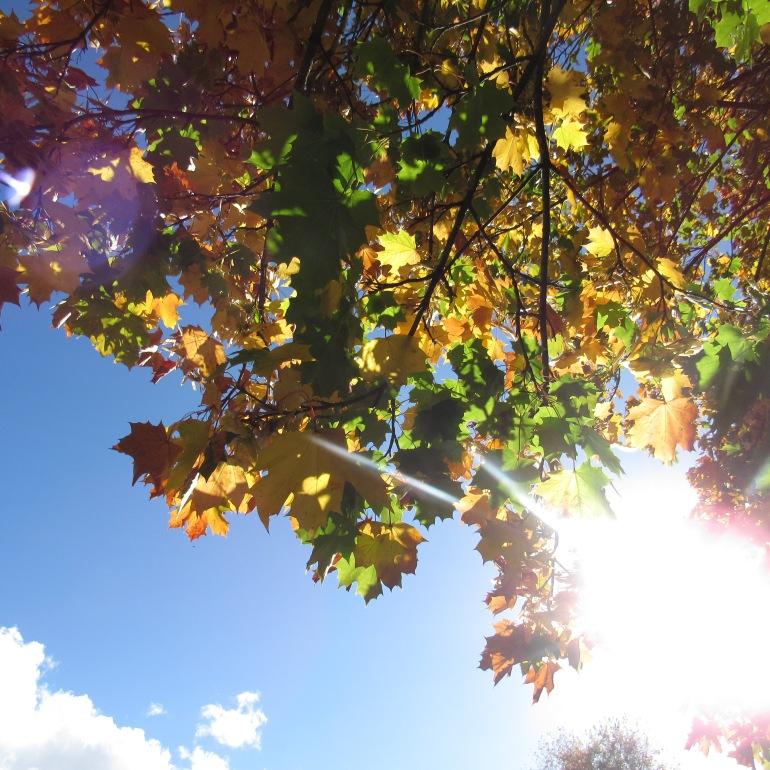 autumn scene 5