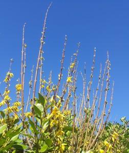 spring yellows 2