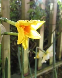 spring yellows 5