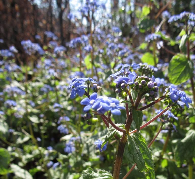 blue petals 2