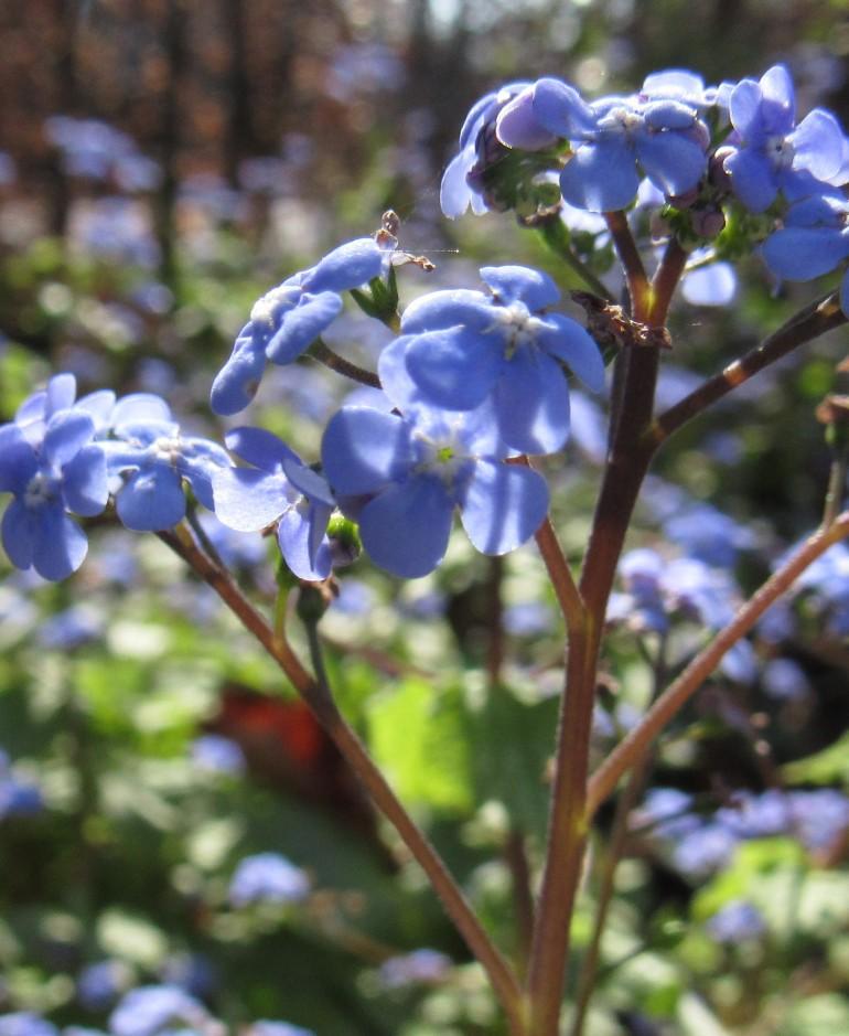 blue petals 3