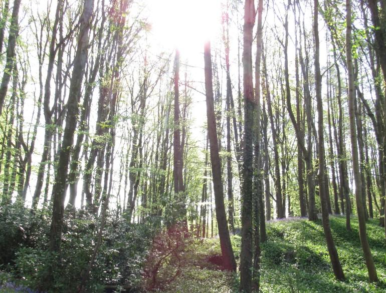 woodand