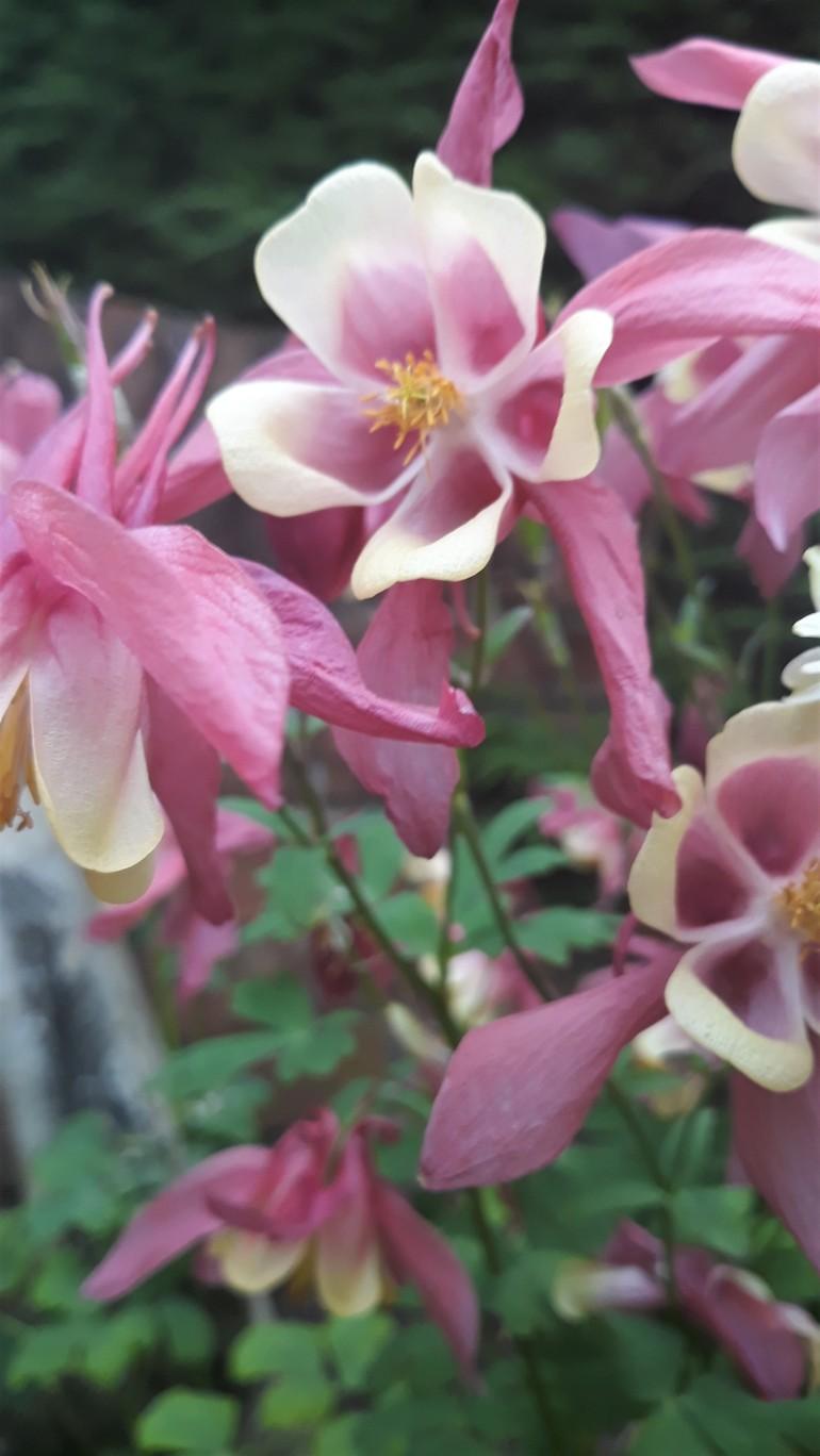 my garden 12