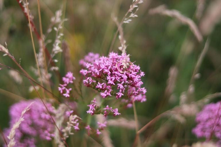 wildflowers 10