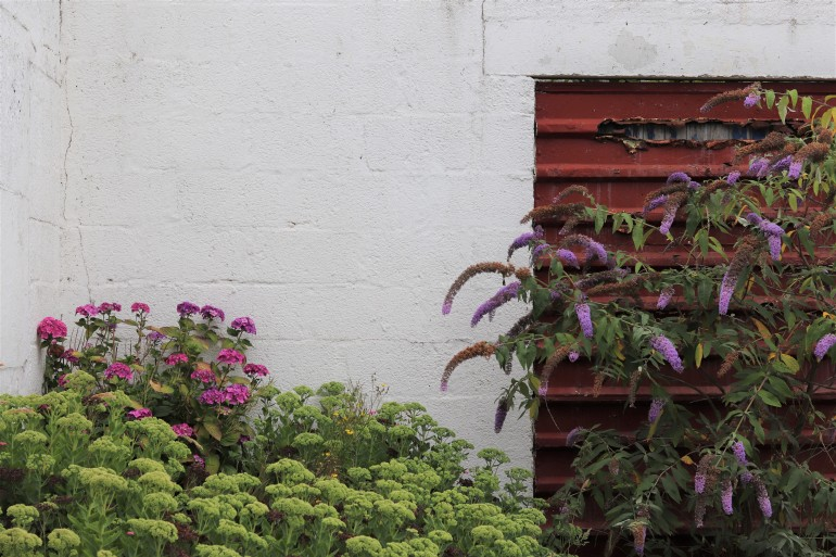 wildflowers 11