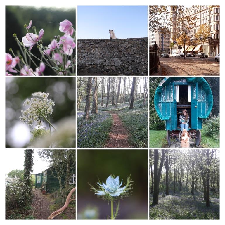 Top Nine Collage