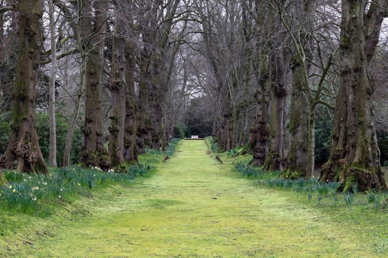 The Moss Walk