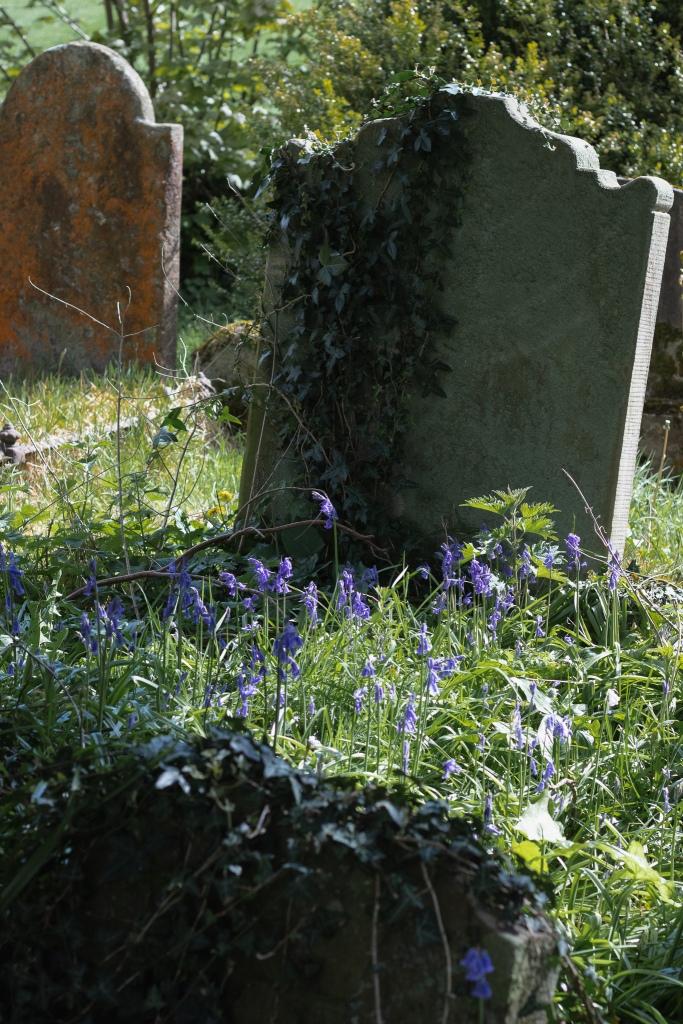 bluebells at Portglenone