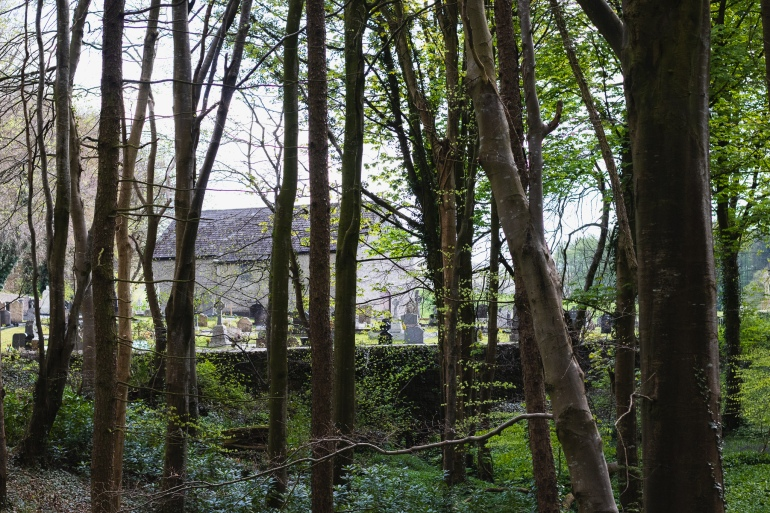 Portglenone forest